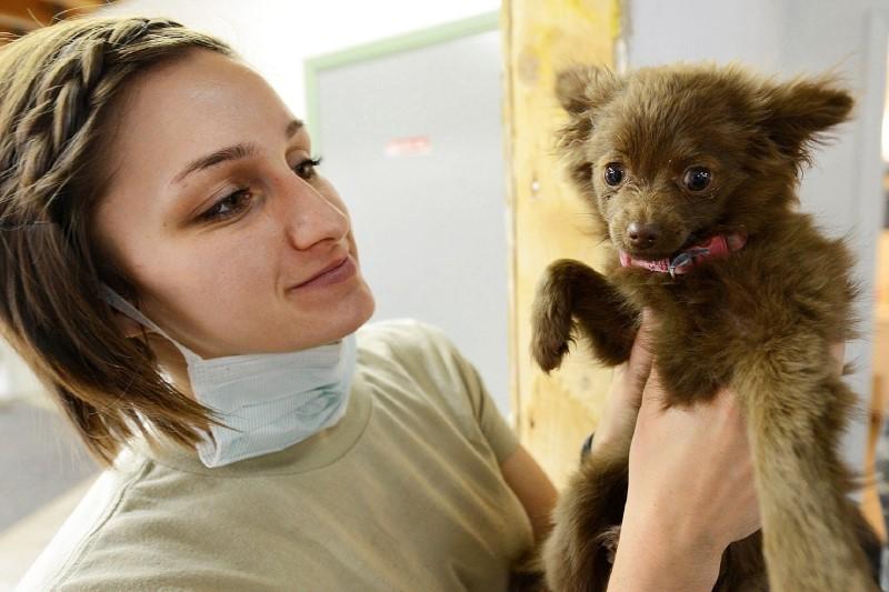 puppy-919223_1280
