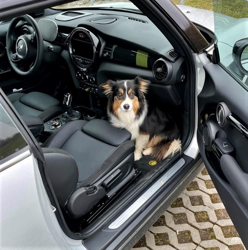 MINI Cooper SE pejsek v autě